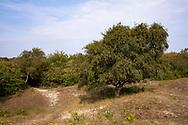 birch tree in the nature park Oranjezon near Vrouwenpolder on the peninsula Walcheren, Zeeland, Netherlands.<br /> <br /> Birke im Naturpark Oranjezon bei Vrouwenpolder auf Walcheren, Zeeland, Niederlande.