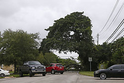 Cars driving by a fallen tree at 44th Street and 67th Avenue in Miami as the outer bands of Hurricane Irma reach South Florida early on Saturday, September 9, 2017. Photo by David Santiago/El Nuevo Herald/TNS/ABACAPRESS.COM