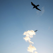 Birds and a mushroom cloud.