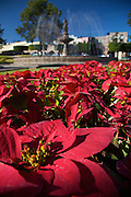 Poinsettias decorate the park at Plaza Villalongin in Morelia, Mexico. The city is a UNESCO World Heritage Site and hosts on of the best preserved collection of Spanish Colonial architecture in the world.