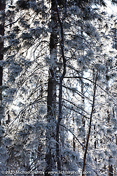 The forest around the village of Maksimiha, Siberia, Russia during the Baikal  Mile Ice Speed Festival. Monday, March 2, 2020. Photography ©2020 Michael Lichter.