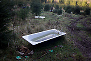 Water-filled bathtub in a north Somerset Christmas tree plantation. On land in the south-west of England, we see the seasonal trees still growing in a wood, carefullt spaced apart across the woodland clearing. Rainwater has probably filled the iron bath to allow passing animals to drink or to help water nearby plants.
