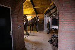 Van Gisbergen Isabel, Van Gisbergen Wil, Ambria, NED<br /> Fokkerij Isabel en Wil van Gisbergen<br /> © Hippo Foto - Dirk Caremans<br /> 20/11/2018