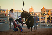 26 NOVEMBER 2011 - CHANDLER, AZ:    PETE BARTKOWSKI competes in bull riding at the Grand Canyon Pro Rodeo Association (GCPRA) Finals at Rawhide Western Town in west Chandler, AZ, about 20 miles from Phoenix Saturday. Bartkowksi was thrown from the bull, knocked unconscious when he hit his head on the animal's horn on the way to the ground and then the bull drove him into fence post. He was taken to a local hospital in an ambulance. The GCPRA Finals is the last rodeo of the GCPRA season. The GCPRA is a professional rodeo association based in Arizona.  PHOTO BY JACK KURTZ