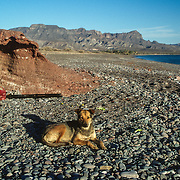 I have always been a dog lover and throughout my travels I have befriended dogs, usually by feeding them and showing them some unfamiliar kindness. I teamed up with a dog from the ranch and he accompanied me on a hike up the rocky canyon, where I had to traverse one large boulder after another and often have to help my canine friend along the way. He stayed with me and slept at my camp with me right up until when I left. It had been nice to have a loyal companion for a few days but sad to watch him wandering along the shoreline rather disconsolately as I paddled away.