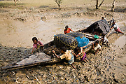A fisherman returns home after an all night fishing spree in the Sunderbans delta,  Bay of Bengal, as he reaches his mooring spot his family come out to greet him as well as give him vital additional manpower at the time of hoisting the boat to higher ground pushing and heaving through the muddy mangrove sludge, West Bengal, India