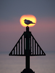 © Licensed to London News Pictures. 30/12/2016. Southsea, UK.  A gull sits on a navigation marker as the sun makes a brief appearance and is seen rising between the sea fog and the low cloud. People on the South Coast have woken up to foggy weather this morning, 30th December 2016. Photo credit: Rob Arnold/LNP