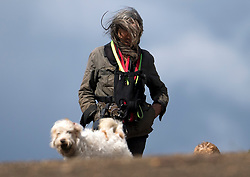 © Licensed to London News Pictures. 04/05/2021. London, UK. A dog walker braves strong winds on Hampstead Heath in North London. High winds and heavy rain are affecting parts of the UK today. Photo credit: Ben Cawthra/LNP