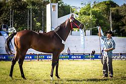 Grande campeão Puro Sangue Inglês na 38ª Expointer, que ocorre entre 29 de agosto e 06 de setembro de 2015 no Parque de Exposições Assis Brasil, em Esteio. FOTO: Jefferson Bernardes/ Agência Preview