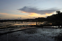 Paddy rice fields, some already planted with seedlings which were destroyed by the Indian Ocean Tsunami rolled over in Dec 2004 in Lampuuk village, District Aceh Besar, Aceh Province, Sumatra, Indonesia