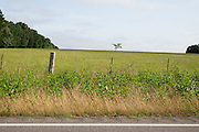UNIONTOWN, AL – MAY 21, 2015: The rural landscape of the Black Belt fifteen miles north of Uniontown, Alabama.