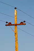 An old wooden telephone pole with three wires at sunset against a blue sky with two old hornero ovenbird clay mud bird nests Bodega Carlos Pizzorno Winery, Canelon Chico, Canelones, Uruguay, South America
