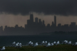 The gulls are grounded as a second massive storm front bears down on Chicago, Ill, USA. The city skyline as seen from Montrose Harbor on Wednesday July 12, 2017 has a dark ceiling covering the city, pouring rain on the harbor. Photo by Nancy Stone/Chicago Tribune/TNS/ABACAPRESS.COM