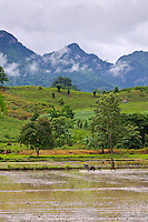 Rice field and mountians, Kanchanaburi Province, Thailand