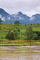 Rice field and mountians, Kanchanaburi Province, Thailand