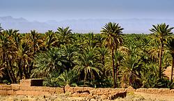 An oasis near Zagora, southern Morocco<br /> <br /> (c) Andrew Wilson | Edinburgh Elite media