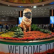The Lion in the MGM Grand hotel wears a face mask in Las Vegas, Nevada on Saturday, October 17, 2020. (Alex Menendez via AP)