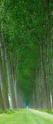 Picturesque avenue of tall trees canaliside at Damme, province of West Flanders in Belgium