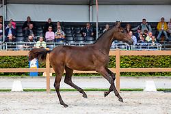 028, O' Dame VDL<br /> KWPN Kampioenschappen - Ermelo 2019<br /> © Hippo Foto - Leanjo De Koster<br /> 028, O' Dame VDL
