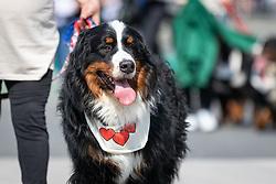 39. Maraton Treh Src on May 18, 2019 in Radenci, Slovenia. Photo by Blaž Weindorfer / Sportida