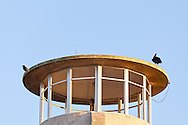 A crow and an American Black Vulture (Coragyps atratus) on the roof of the concrete observation tower in the Shark Valley section of Everglades National Park, Florida. WATERMARKS WILL NOT APPEAR ON PRINTS OR LICENSED IMAGES.