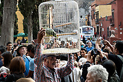 A Mexican man carries a parrot in a cage during the annual blessing of the animals on the feast day of San Antonio Abad at Oratorio de San Felipe Neri church in the historic center of San Miguel de Allende, Guanajuato, Mexico.