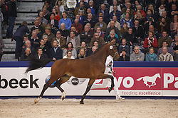 585 - Henkie<br /> KWPN Henstenkeuring 's Hertogenbosch 2015<br /> © Dirk Caremans