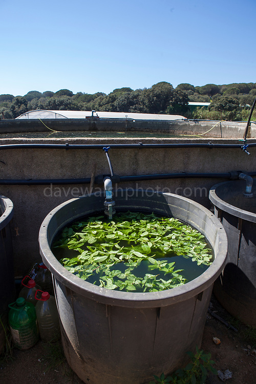 Pool for making natural insecticide at organic producer during an open day at Can Tria de Mata, near Mataro, Barcelona, Catalonia. (c) Dave Walsh 2017