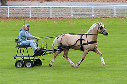 © Licensed to London News Pictures. 26/10/2018. Builth Wells, Powys, Wales, UK. A cob and buggy get some exercise on the first day of the 55th Autumn Cob Sale - the largest sale in the World of registered Welsh Cobs Section D, Welsh Ponies of Cob Type Section C and their Part Breds. The sale, held by Brightwells auctioneers, takes place over three days at The Royal Welsh Showground in Builth Wells, Powys, UK, attracting an audience of thousands of Welsh Cob enthusiasts worldwide. Photo credit: Graham M. Lawrence/LNP