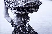 Historic photograph of grape harvest in Manarola, Cinque Terre, Liguria, Italy