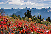 From Mount Dickerman, view Del Campo, Morning Star, Sperry, and Vesper Peaks (left to right) and red fall foliage colors in Mount  Baker-Snoqualmie National Forest. Hike Mount Dickerman Trail #710 from the Mountain Loop Highway, east of Verlot Visitor Center, Washington, USA.