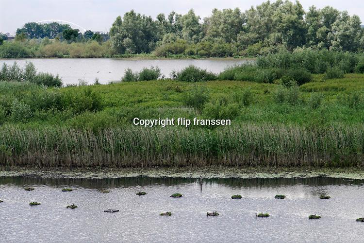 Nederland, Nijmegen, ooijpolder, 11-6-2020  In een plas, de oude waal, liggen drijvende nesten waar de zwarte stern broedt . De nestjes zijn door de mens geplaats omdat de vogels niet voldoende  waterplanten vinden om zelf een drijvend eilandje van de maken. Foto: ANP/ Hollandse Hoogte/ Flip Franssen