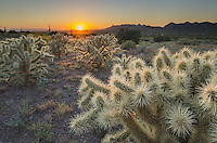 Sunset over the Sonoran Desert  near the Superstition Mountains, Arizona, Jumping Cholla (Cylindropuntia fulgida) in the foreground