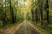 Leaf covered straight road through yellow and green trees.