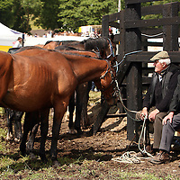 Taking a break for the commotion at the annual Spancilhill Horse Fair on Tuesday.<br /> Photograph by Yvonne Vaughan
