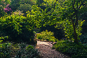 Path in green garden