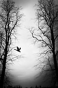 """bird.The shadow line is a trip, a trip losing myself, looking for myself.<br /> Like the romance """"the shadow line"""" by Joseph Conrad (1917).<br /> I was in Italy, England, Bosnia, Montenegro, Serbia..<br /> It isn't a reportage, it isn't a story.<br /> It is a searching.."""