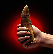 90-million-year-old Carcharodontosaurus tooth discovered during University of Chicago professor Paul Sereno's expedition to Niger in the Sahara.