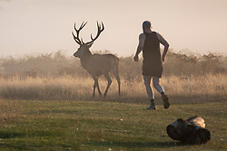 © Licensed to London News Pictures. 10/10/2018. London, UK. A jogger passes a stag at sunrise in Bushy Park, south London. Forecasters are expecting unusually warm temperatures for October. Photo credit: Rob Pinney/LNP