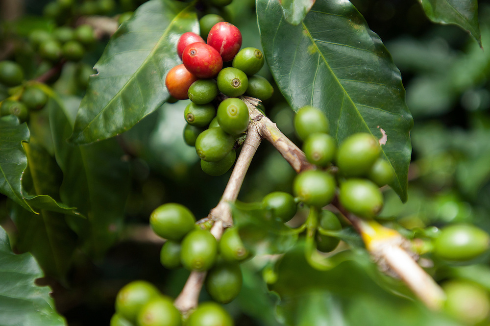 Let's Talk Coffee event sponsored by Sustainable Harvest Coffee Importers.