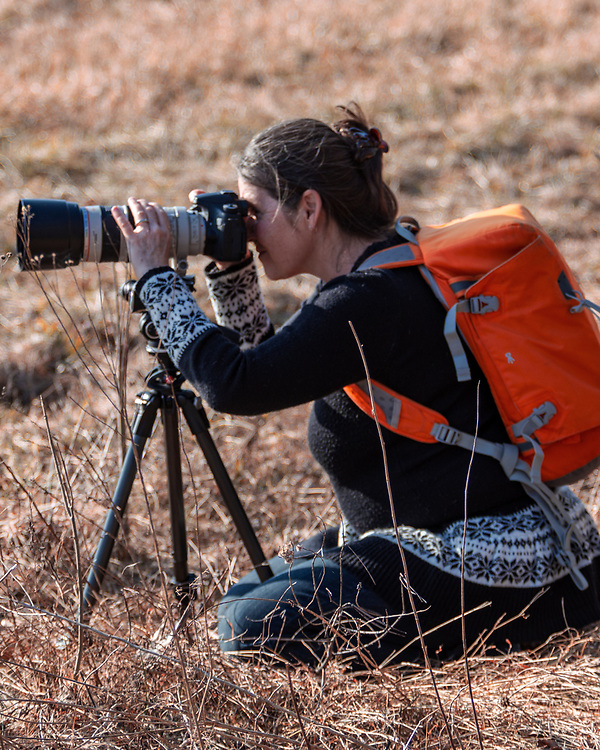 Kleinfeltersville, PA / USA - March 8, 2016:  A photographer takes pictures of migrating snow geese at the Middle Creek Wildlife Management Area.