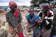 "Mopane worm sellers in a South African market in Thohoyandou claim the lack of rain to be attributable for the smaller than normal supply of the insects. Mpumalanga, South Africa. ""Mopane"" refers to the mopane tree, which the caterpillar eats. Dried mopane worms have three times the protein content of beef and can be stored for many months. (Man Eating Bugs page 127) ."