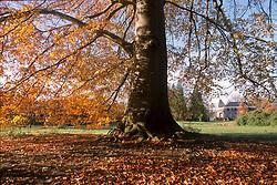 's-Graveland, Wijdemeren Herfstblad, Autumn leave
