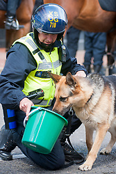 The English Defence League (EDL) return to Sheffield to lay flowers at Sheffield War Memorial . resulting in a police operationlasting over 5 hours involving Officers from Wales, South Yorkshire, Greater Manchester, West Yorkshire, Lancashire and Mersyside Police forces. A Police Dog Handler gives his dog a drink during a lul in the operation <br /> 8 June 2013<br /> Image © Paul David Drabble<br /> www.pauldaviddrabble.co.uk