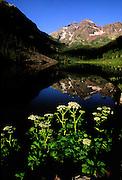 Cow Parsnip flowers and Maroon Bells peaks and Maroon Lake, near Aspen, Colorado