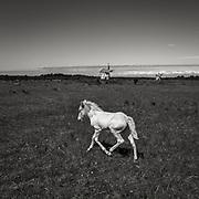 Häst vid kvarnarna på Hundlausar på södra Gotland