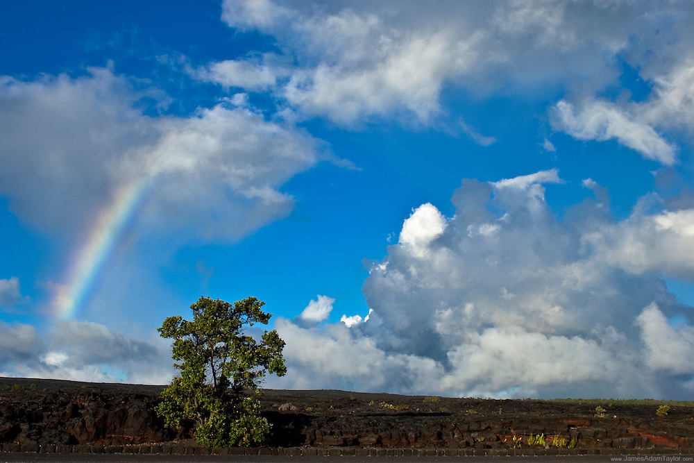 blue sky, fluffy white clouds, a rainbow, hardened lava, and an O'hia Lehua tree, it's stereotypical Hawaii in Volcanoes National park.