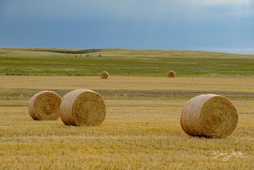 Hay rolls on the prairie, with threatening skies, Glasgow, Montana, USA