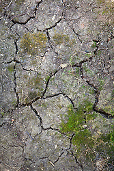Cracks in clay soil that has dried out