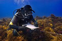 02/April/2013 Western Australia.<br /> Científico de la Universidad de Western Australia, UWA, cogiendo datos durante una inmersión en las Islas Abrolhos.<br /> <br /> ©JOAN COSTA.